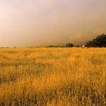 wild_meadow