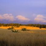 mendocino_meadow