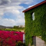 leoness_winery_temecula