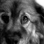 dog_portrait