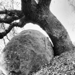 Angry Oak