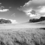 Open Meadow BW