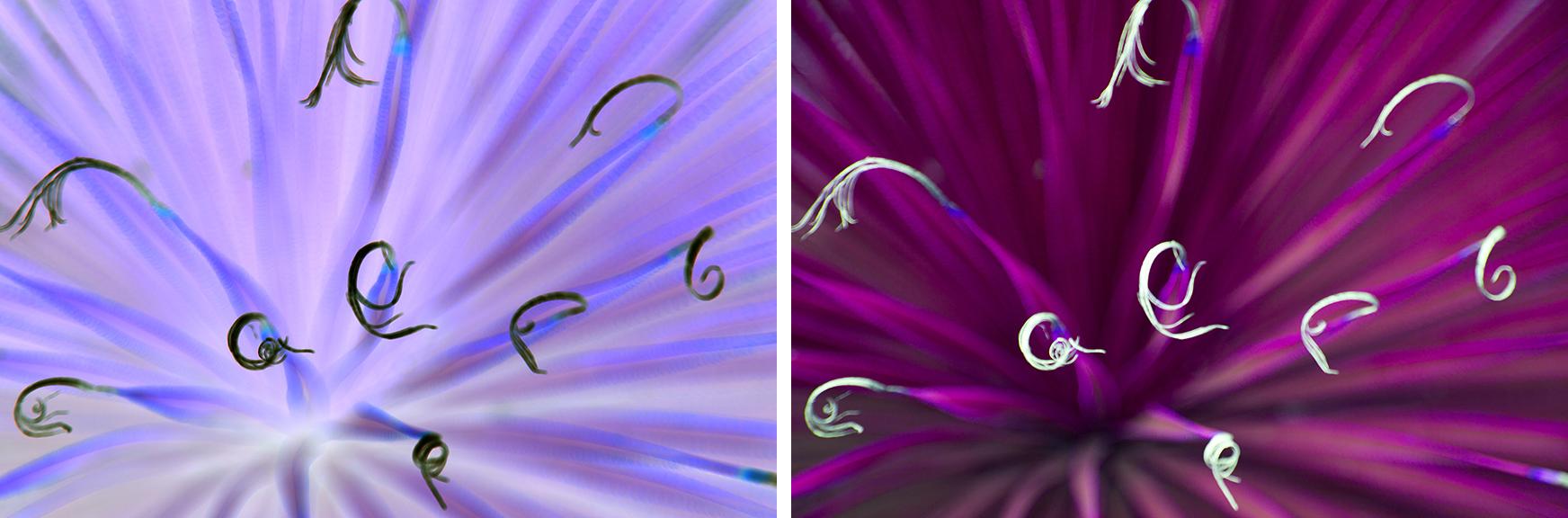 Monochrome Flora