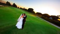 Recent Wedding Work